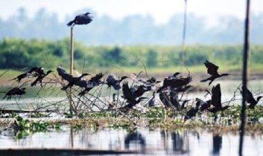 নওগাঁর 'পাখি গ্রাম'
