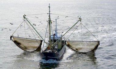 বৈদ্যুতিক শক দিয়ে মাছ ধরা নিষিদ্ধ নেদারল্যান্ডসে